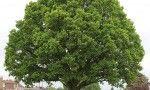 Tree Preservation