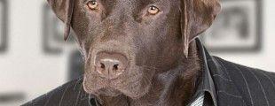 Popular posts – dog mess