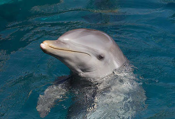 Dolphin at Eling
