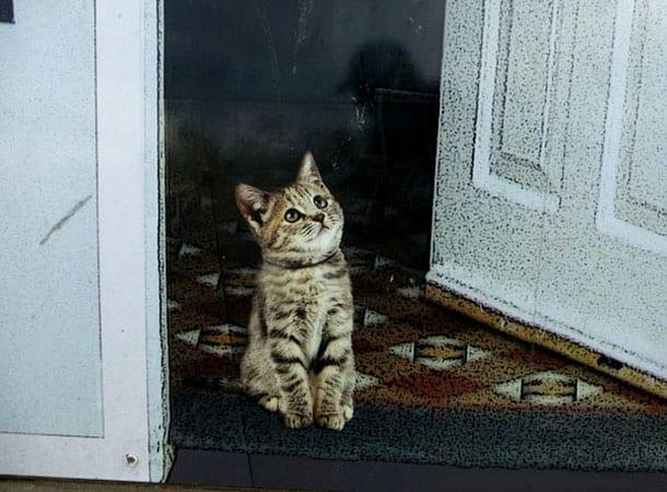 Kitten At The Doorstep