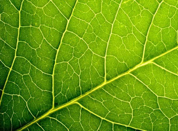 air - Macro Image Of A Leaf