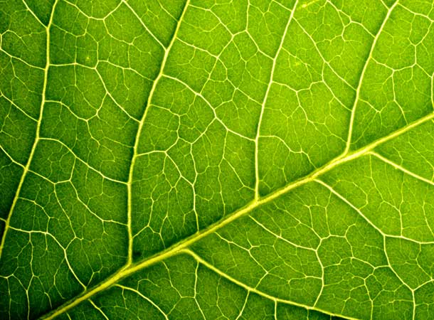 air - Macro Image Of A Leaf