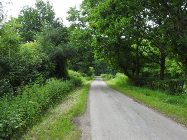 sound planning - Leafy Lane