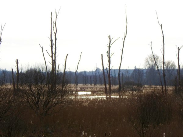 Fishlake Meadows...