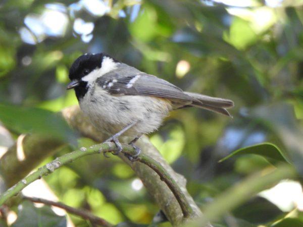 Woodland Bird...